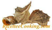 Chiocciole e lumachine di mare