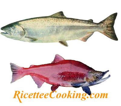 Salmone argentato e salmone rosso