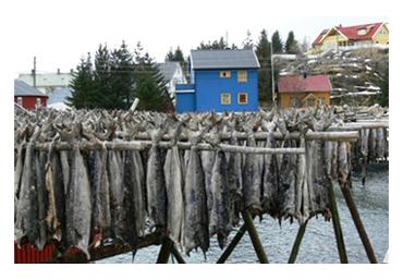 Un tipico paesaggio norvegese con il merluzzo posto ad essiccare nelle apposite rastrelliere